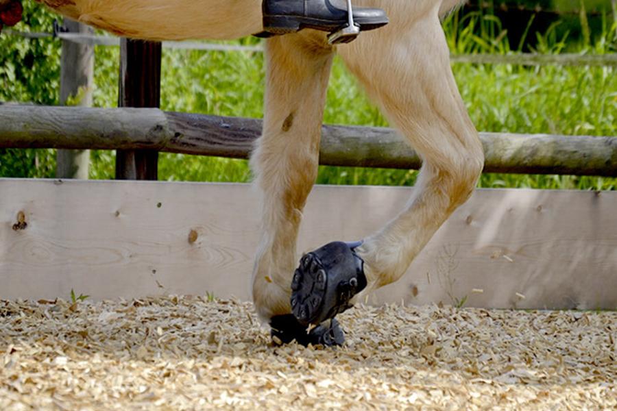Equestrian Woodchip